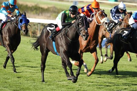 Durbanville Races